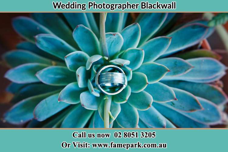 Photo of the wedding ring at the top of the plant Blackwall NSW 2256