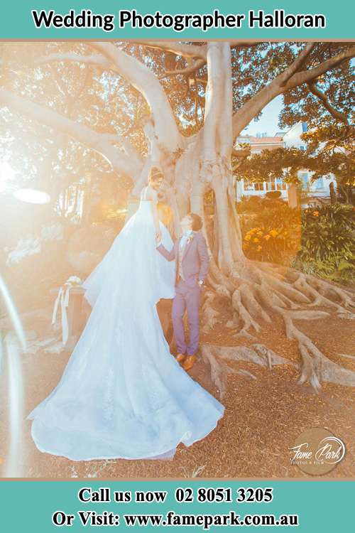 The Groom and the Bride hold their hands while looking at each other under the tree Halloran