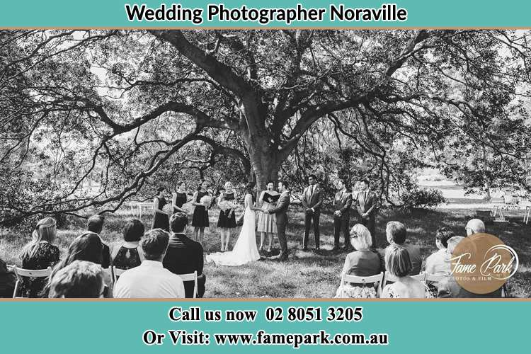 Wedding ceremony under the big tree photo Noraville NSW 2263